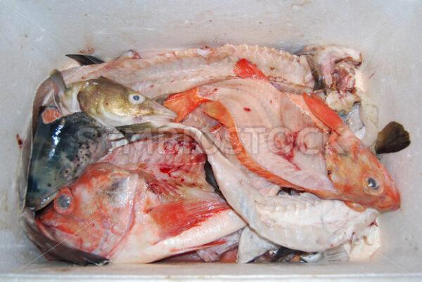 Fischabfälle für einen Fischfond - Fotos-Schmiede