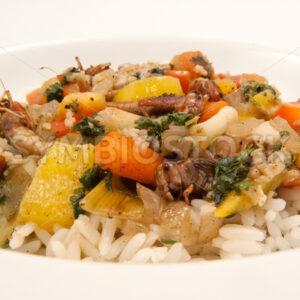 Gebratene Heuschrecken mit Gemüse auf Basmati-Reis Frontal - Fotos-Schmiede