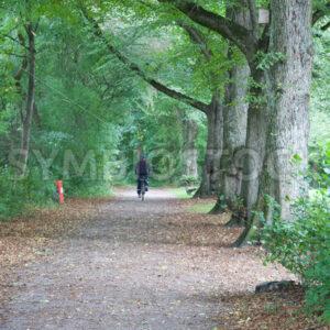 Allee Nähe Kielmannseggstraße - Fotos-Schmiede