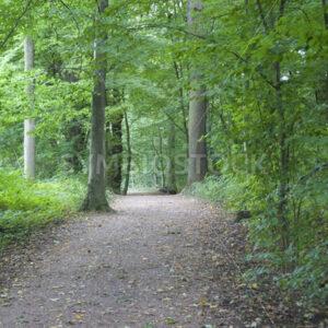 Waldweg - Fotos-Schmiede
