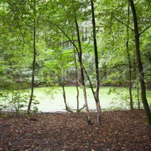 Algenvermehrung im kleinen Teich - Fotos-Schmiede