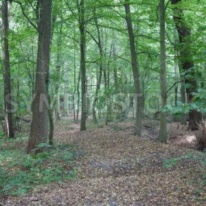 Etwas unbefestigter Weg durch den Wald - Fotos-Schmiede