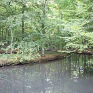 Leicht verschmutzter Teich - Fotos-Schmiede
