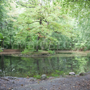 Teich - Fotos-Schmiede