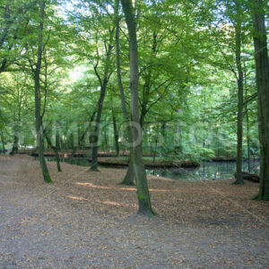 Teich mit Bachverlauf - Fotos-Schmiede