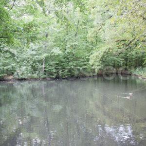 Teich mit Enten - Fotos-Schmiede