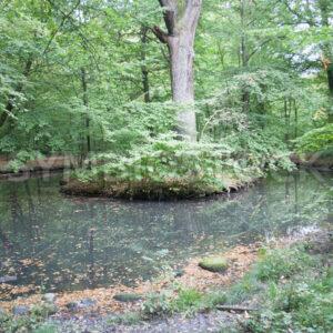 Teich mit kleiner Insel - Fotos-Schmiede