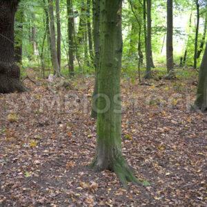 Waldboden unterwegs - Fotos-Schmiede