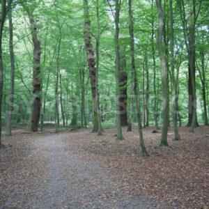 Wegverlauf durch den Wald - Fotos-Schmiede